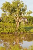 Cottonwood tree reflection on small lake. With house in background royalty free stock photography