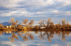 Cottonwood Trees in Autumn by a Lake Stock Photos