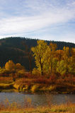 Cottonwoods on the Clark Fork Stock Photography