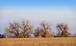 Cottonwoods On The Colorado Prairie Stock Photos