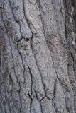 Cottonwoodschors - Close-up Stock Foto's