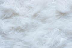 Cottonwool tekstura Zdjęcie Stock