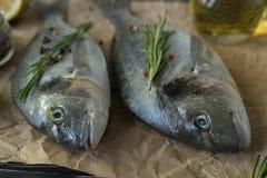 Cottura cruda ed ingredienti del pesce Dorado, limone, erbe e spezie Immagine Stock Libera da Diritti