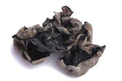 Cottura del fungo del nero di serie dell'ingrediente per i adv ecc del ristorante, della drogheria e di altre immagine stock