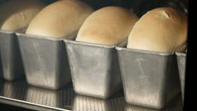 Cottura del pane in forno Timelapse video d archivio