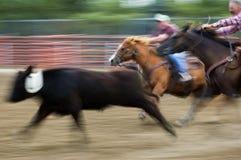 Cottura del rodeo e sfuocatura di movimento atmosferiche Fotografia Stock