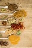 Cottura delle spezie sui cucchiai Fotografie Stock