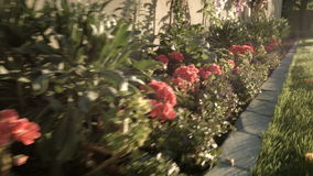 Cottura tenuta in mano del colpo dai fiori in una bella iarda archivi video