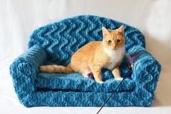 Couch kitty Stock Photography
