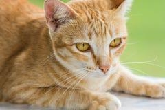 Couche en bas du chat dépouillé par orange mignonne Image stock