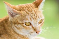 Couche en bas du chat dépouillé par orange mignonne Photo libre de droits