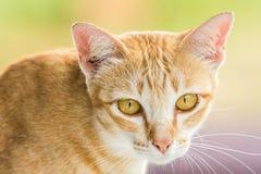 Couche en bas du chat dépouillé par orange mignonne Photo stock
