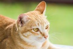 Couche en bas du chat dépouillé par orange mignonne Images stock