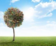 Couche-point sud-africain d'arbre d'argent Image libre de droits