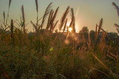 Coucher de soleil contre quelques branches et buissons Photographie stock libre de droits