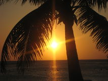 Coucher de soleil Roatan Honduras Plage Palmier Royalty Free Stock Photo
