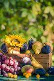Coucher de soleil saisonnier de lumière de panier de fruits de fin d'été de jardin Image stock