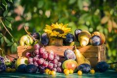 Coucher de soleil saisonnier de lumière de panier de fruits de fin d'été de jardin photos stock