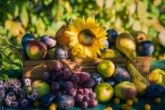 Coucher de soleil saisonnier de lumière de panier de fruits de fin d'été de jardin Photos libres de droits