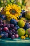 Coucher de soleil saisonnier de lumière de panier de fruits de fin d'été de jardin Photographie stock libre de droits