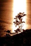 Coucher du soleil à l'usine et à la mer de Lubenice Images libres de droits