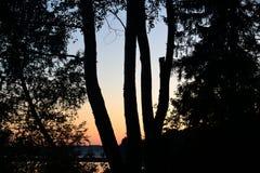 Coucher du soleil à la forêt Photographie stock libre de droits