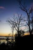 Coucher du soleil à la forêt de palétuvier Image stock