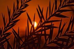 Coucher du soleil à la mer morte, avec vue sur la côte de l'Israël et le shilouette des palmettes dans le premier plan, sur la pl images stock