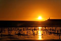 Coucher du soleil à la plage Photos stock