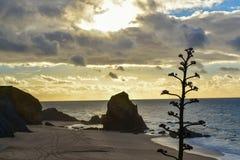 Coucher du soleil à la plage de Santa Cruz - Portugal Images stock