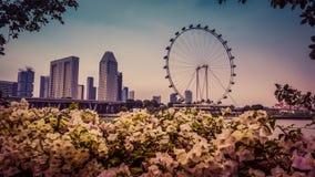 Coucher du soleil à Singapour Images stock