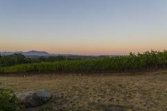 Coucher du soleil à un établissement vinicole images libres de droits