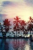 Coucher du soleil à un littoral avec des palmiers Photo stock
