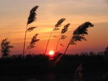 Coucher du soleil à un pré Image libre de droits