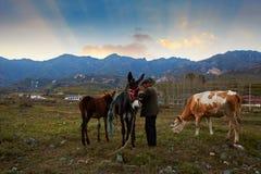 Coucher du soleil élevé jaune de pré de terre, Chine photo stock