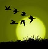 Coucher du soleil illustration libre de droits