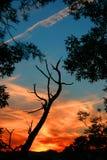 Coucher du soleil 3 Image libre de droits