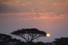 Coucher du soleil 9971 d'Amboseli Photographie stock