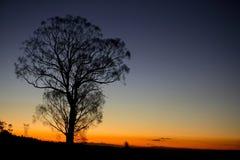 Coucher du soleil africain Image libre de droits