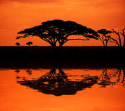 Coucher du soleil africain Images stock