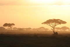Coucher du soleil africain Photographie stock