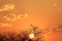Coucher du soleil - or africain Images stock