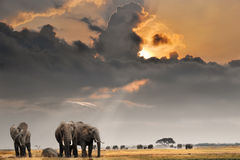 Coucher du soleil africain avec des éléphants Photos libres de droits