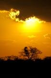 Coucher du soleil africain d'or Image libre de droits