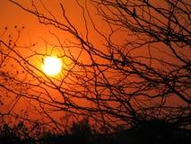 Coucher du soleil africain par des arbres Images stock