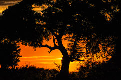 Coucher du soleil africain, parc national de Chobe, Botswana Image stock
