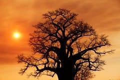 Coucher du soleil africain sur les plaines de la savane Photographie stock libre de droits