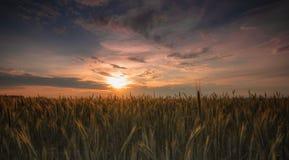 Coucher du soleil agricole Photo stock
