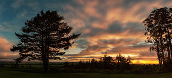 Coucher du soleil ain les arbres Image stock