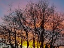 Coucher du soleil anglais derrière des arbres Photo stock
